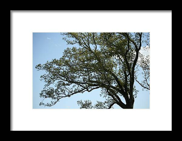 Tree Framed Print featuring the photograph Permanent Movement by Magda Levin-Gutierrez