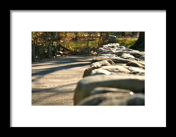 Forest Framed Print featuring the photograph Perspective 2 by Robert Joseph