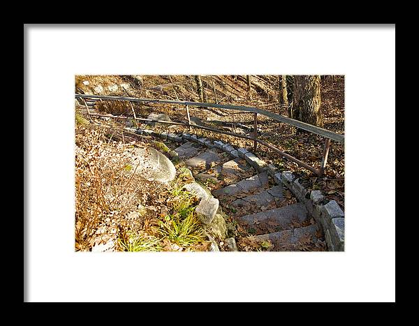 Forest Framed Print featuring the photograph Perspective by Robert Joseph