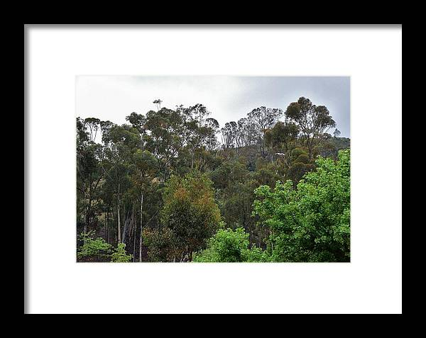 Linda Brody Framed Print featuring the photograph Peters Canyon In The Rain 8 by Linda Brody