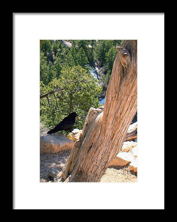 Grand Canyon Framed Print featuring the photograph Petrified Raven At Grand Canyon by Merja Waters
