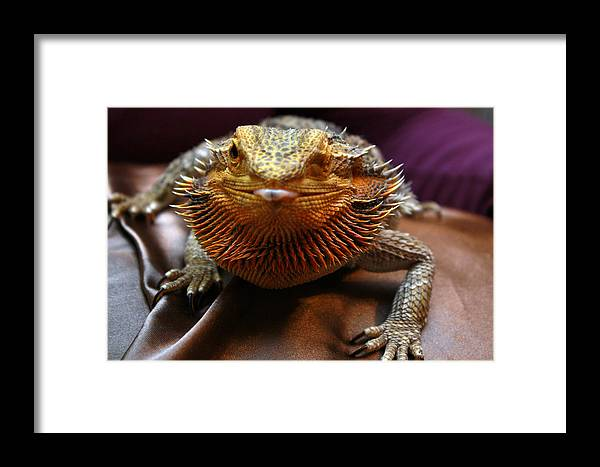 Lizard Framed Print featuring the photograph Pfft by Kathryn Eygabroad