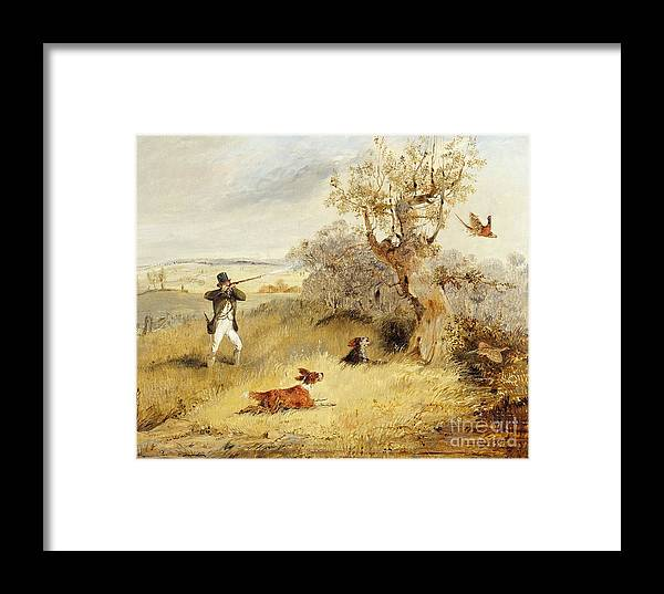 Pheasant Framed Print featuring the painting Pheasant Shooting by Henry Thomas Alken