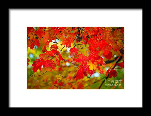 Berry Framed Print featuring the photograph Photo Synthesis by Diane E Berry
