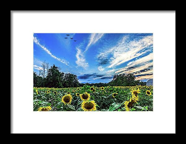Sunflowers Framed Print featuring the photograph Photobomb by Joe Holley