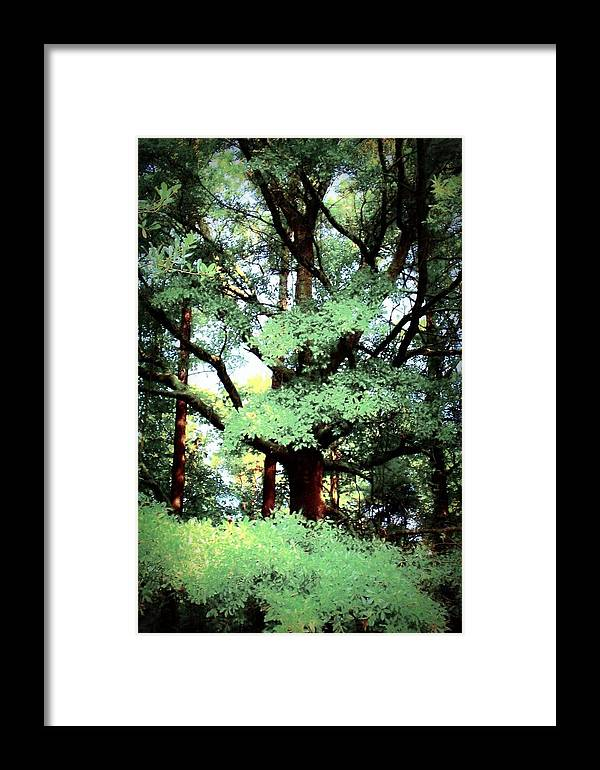 Tree Framed Print featuring the photograph Photosynthesis by Jill Tennison