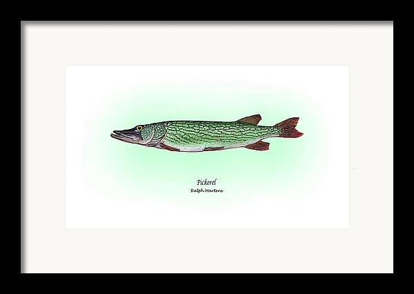 Pickerel Framed Print featuring the painting Pickerel by Ralph Martens