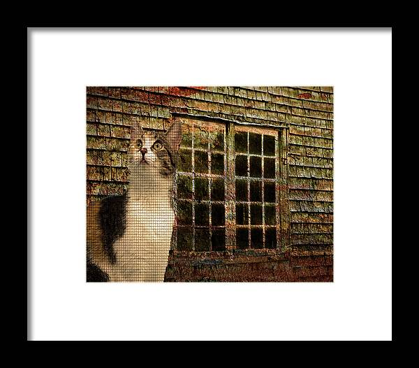Animal Framed Print featuring the photograph Pieces by Paul Slebodnick