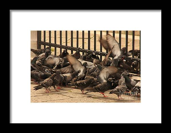Birds Framed Print featuring the photograph Pigeons In Venice by Michael Henderson
