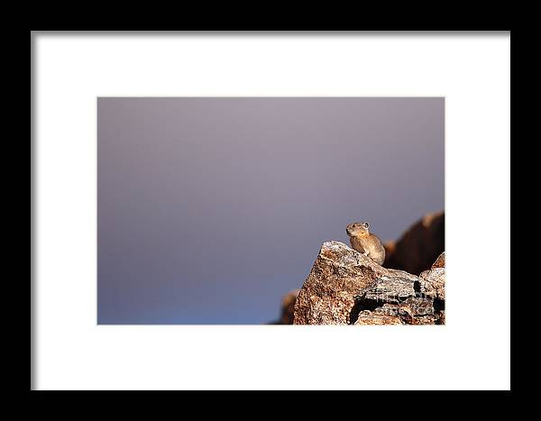 Pika Framed Print featuring the photograph Pika Perched High Among Stormy Skies by Max Allen