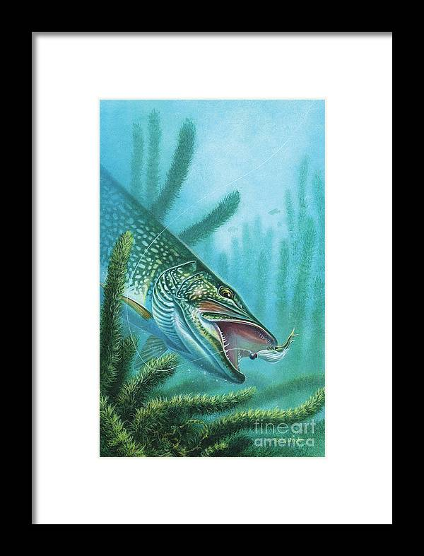 Jon Q Wright Framed Print featuring the painting Pike And Jig by JQ Licensing