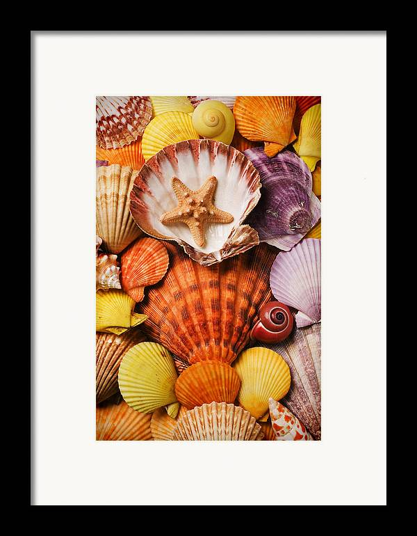 Seashells Framed Print featuring the photograph Pile Of Seashells by Garry Gay