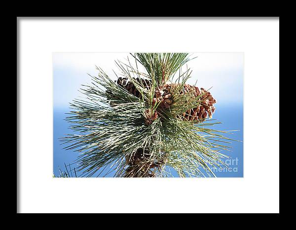 Pine Cones Framed Print featuring the photograph Pine Cones Over Lake Tahoe by Carol Groenen
