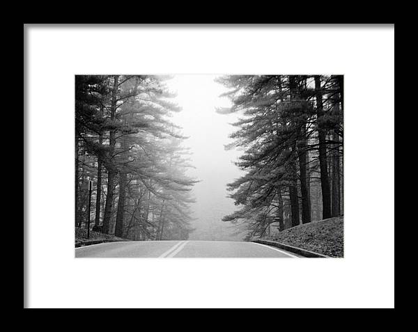 Pines Framed Print featuring the photograph Pine Mist by Paul Trunk