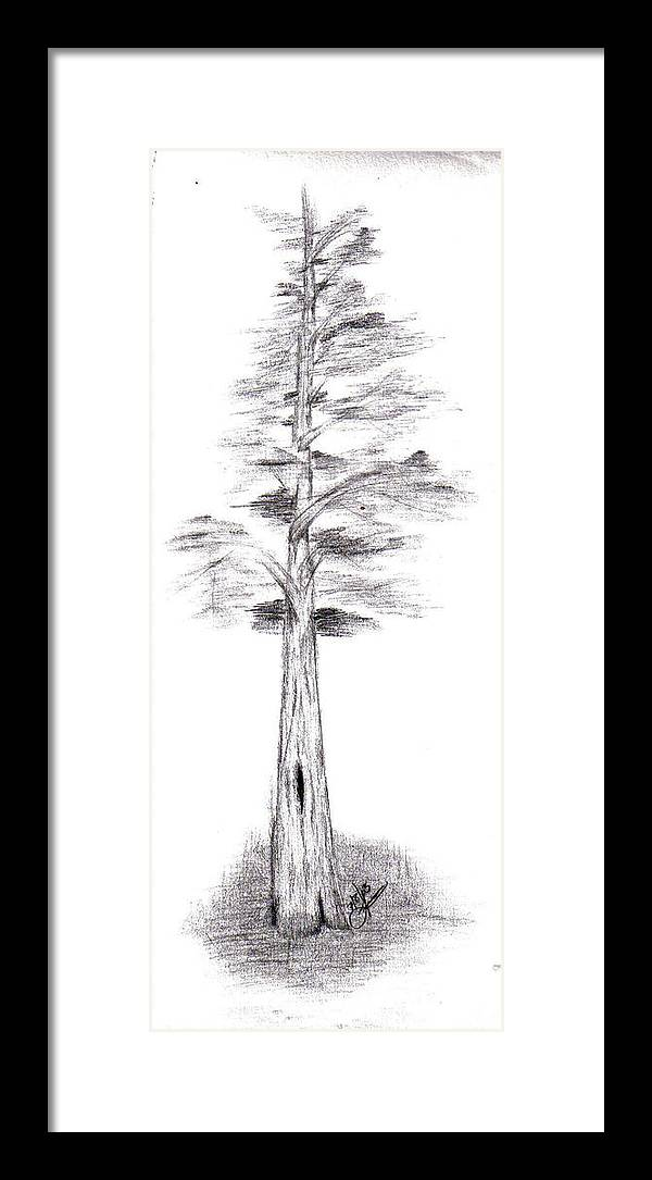 Framed Print featuring the drawing Pine Tree by Lynnette Jones