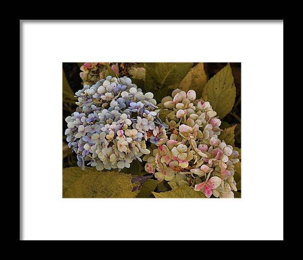 Pink Framed Print featuring the photograph Pink And Blue by JAMART Photography