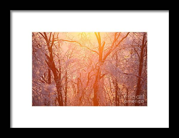 Pink Framed Print featuring the photograph Pink and Gold by Nadine Rippelmeyer