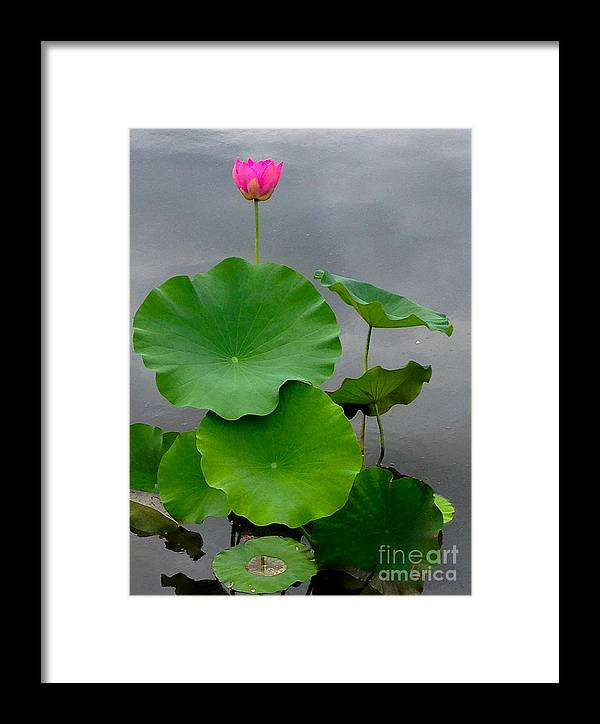 Iphone Framed Print featuring the photograph Pink And Green On Grey by Bruce E Dall
