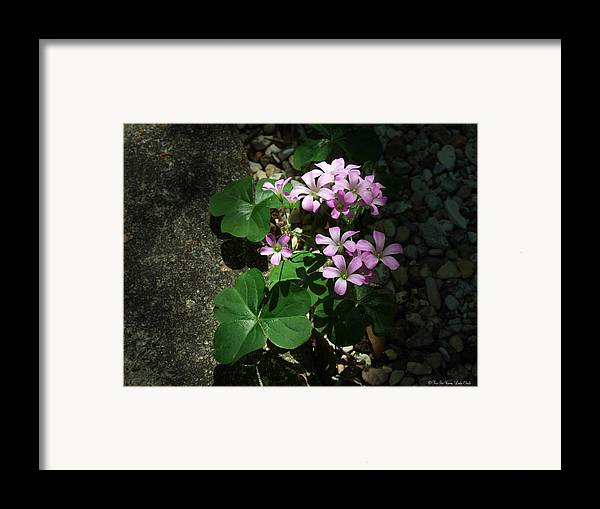 Flowers Framed Print featuring the photograph Pink And Shadows by Linda Ebarb