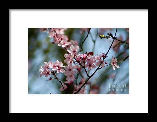 Flower Framed Print featuring the photograph Pink Blossoms by Hannah Goddard-Stuart