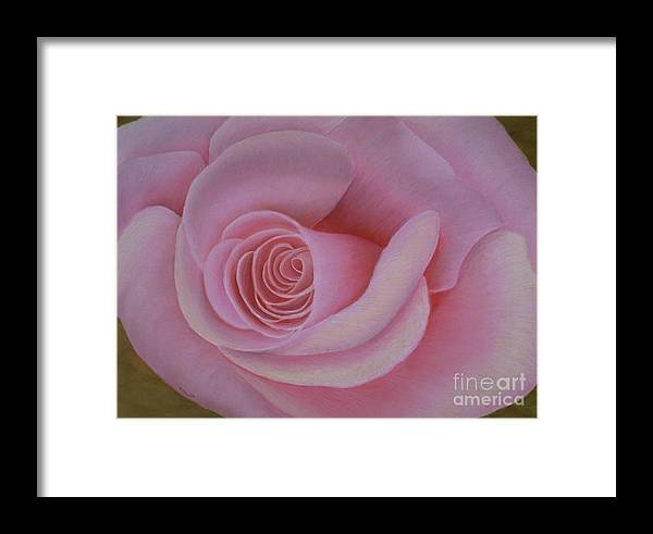 Rose Framed Print featuring the painting Pink Blush by Mary Erbert