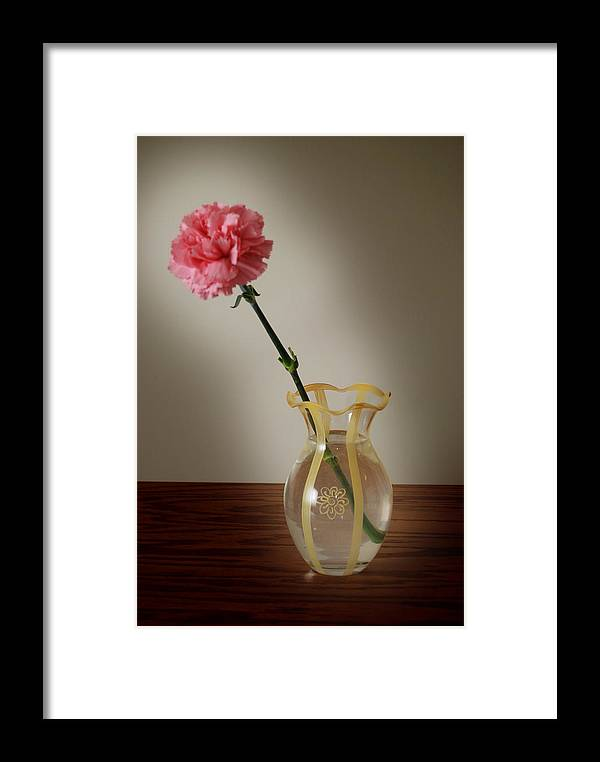 Flower Framed Print featuring the photograph Pink Carnation by Dave Chafin