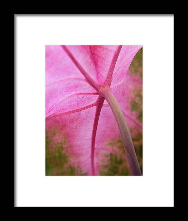 Pink Coleus Framed Print featuring the photograph Pink Coleus by Diane Moore