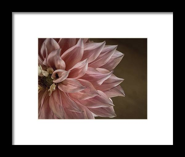Flower Framed Print featuring the photograph Pink Dahlia In Bloom by Kaleidoscopik Photography