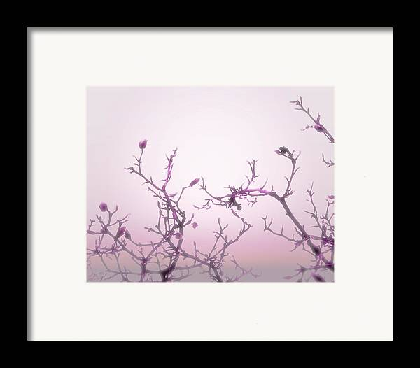 Pink Wall Art Framed Print featuring the photograph Pink Dawn by Ann Powell