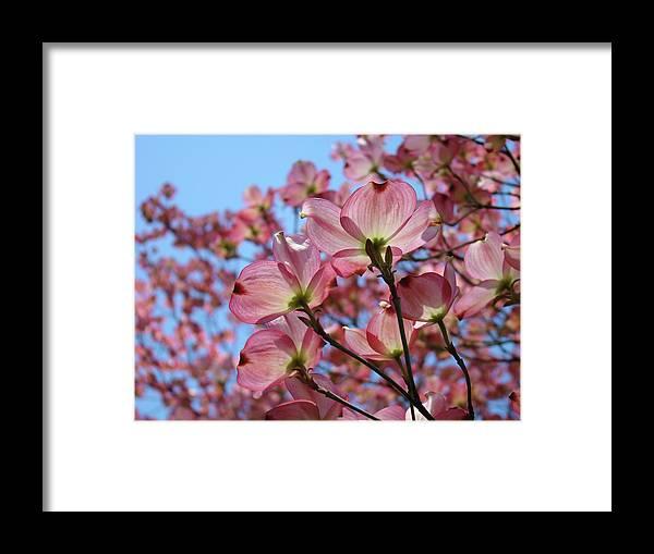 Dogwood Framed Print featuring the photograph Pink Dogwood Flowers Landscape 11 Blue Sky Botanical Artwork Baslee Troutman by Baslee Troutman