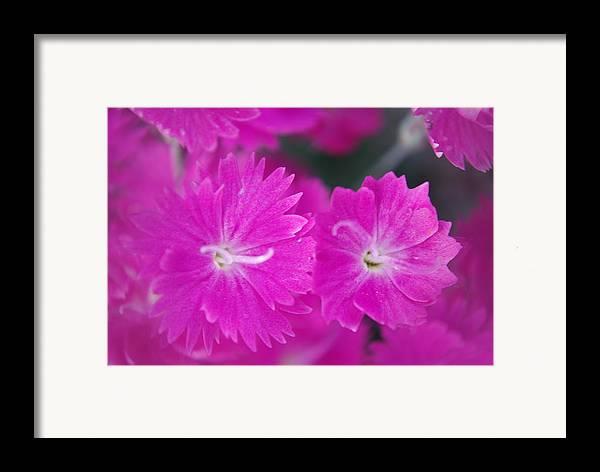 Flowers Framed Print featuring the photograph Pink Flower Closeup by Lisa Gabrius