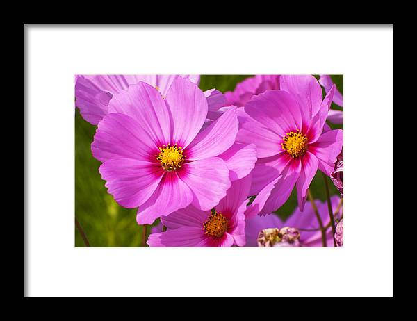 Flower Framed Print featuring the photograph Pink Flower Conspirisy by Richard Henne