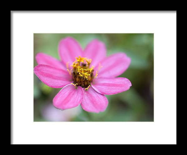Pink Framed Print featuring the photograph Pink Flower by Jessica Wakefield