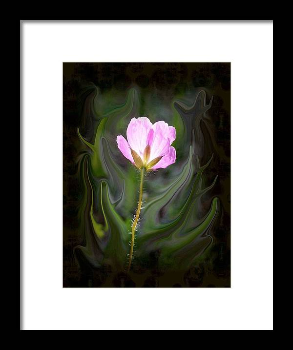 Pink Flower Framed Print featuring the photograph Pink Flower by Jim Darnall