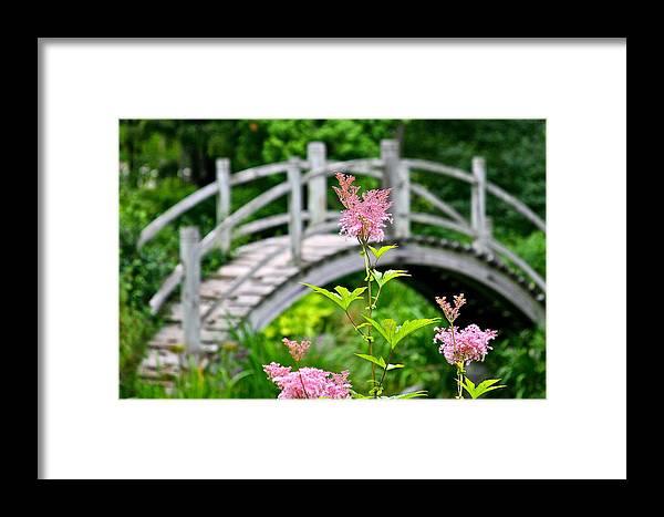 Bridge Framed Print featuring the photograph Pink Flower by Robert Joseph