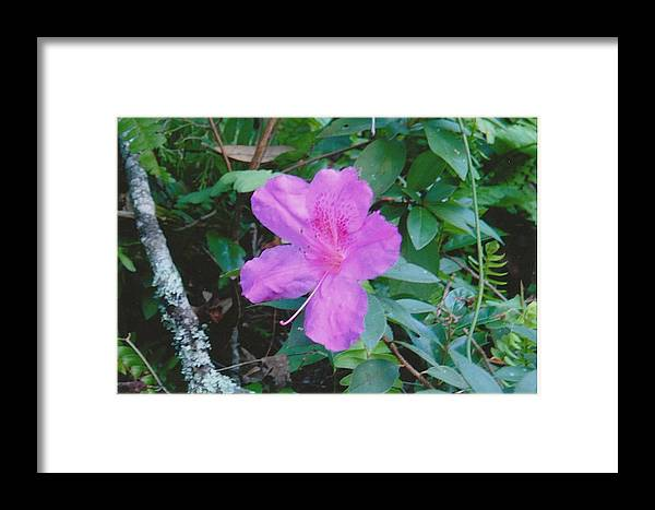 Photograph Framed Print featuring the photograph Pink Flower by Tara Kearce