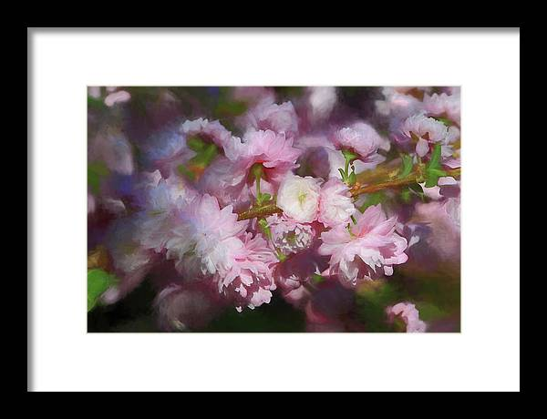 Flowering Almond Framed Print featuring the photograph Pink Flowering Almond by Donna Kennedy