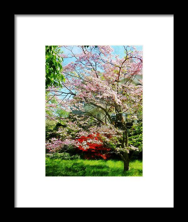 Dogwood Framed Print featuring the photograph Pink Flowering Dogwood by Susan Savad