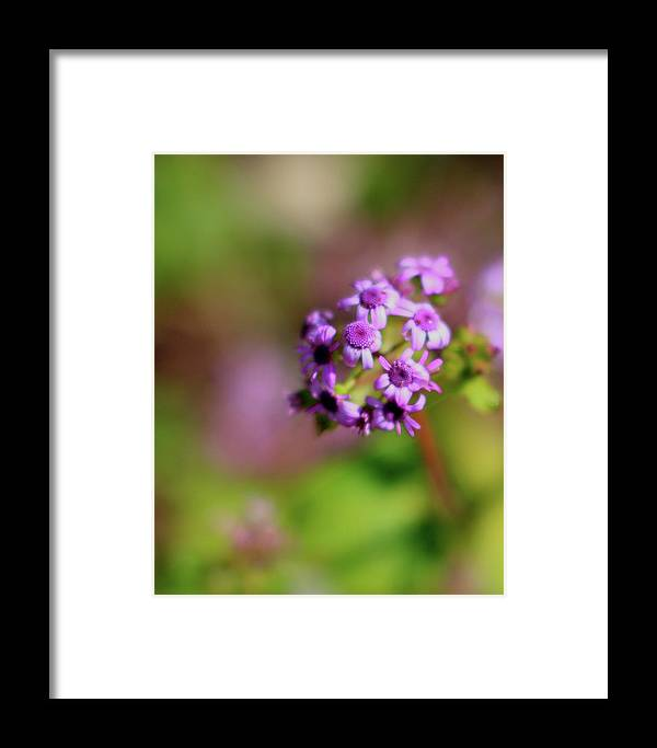 Pink Framed Print featuring the photograph Pink Flowers . 40d4800 by Wingsdomain Art and Photography