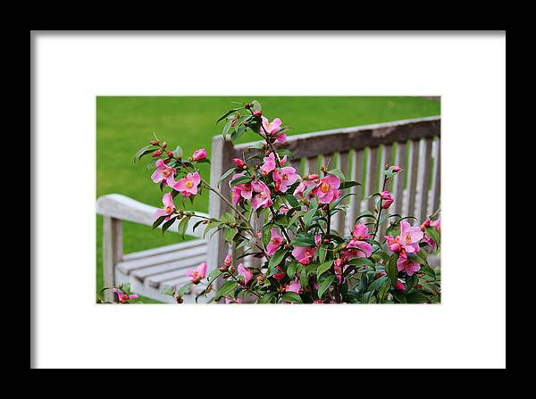 Bench Framed Print featuring the photograph Pink Flowers By The Bench by Cynthia Guinn