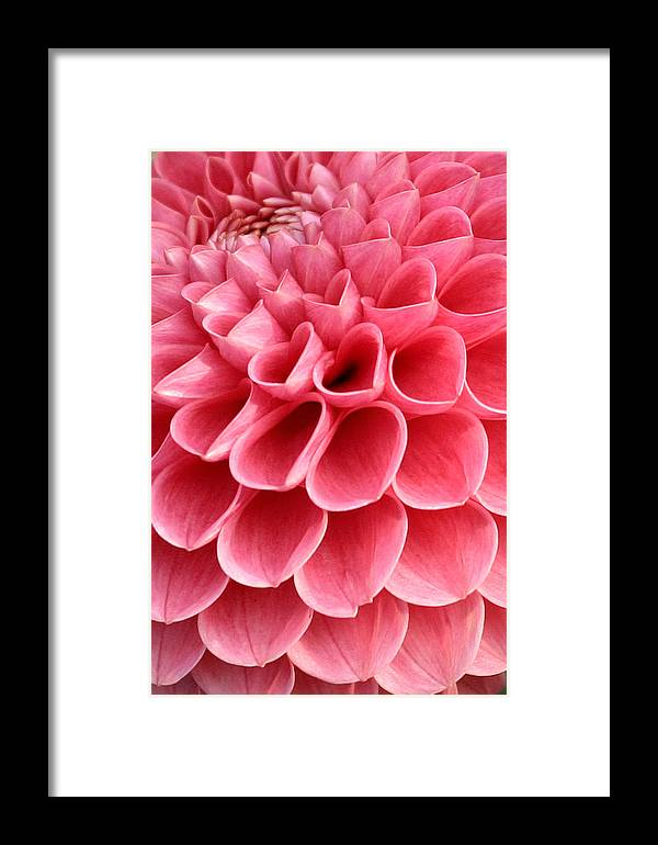 Pink heart shaped flower framed print by pierre leclerc photography pink framed print featuring the photograph pink heart shaped flower by pierre leclerc photography mightylinksfo