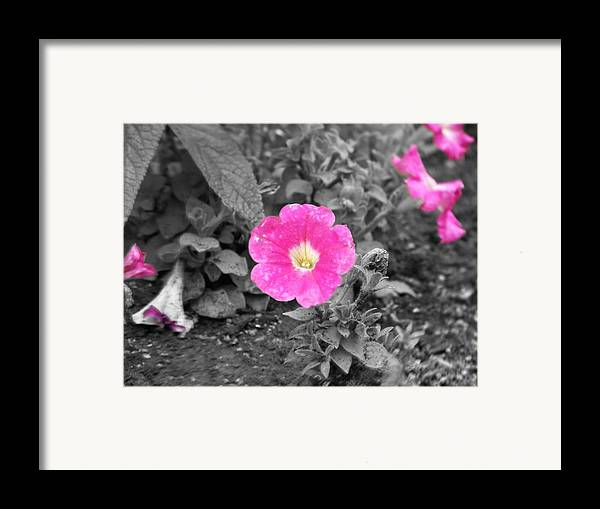 Flowers Framed Print featuring the photograph Pink by Jessica Burgett