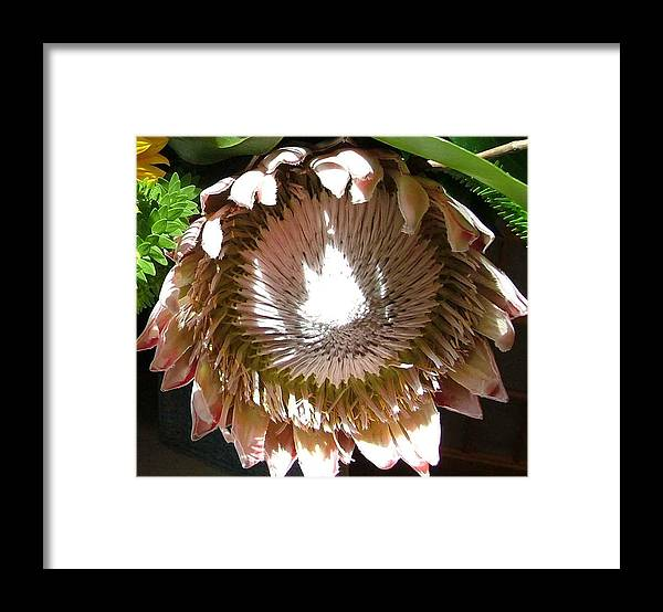 Flower Framed Print featuring the photograph Pink by Mindy Newman