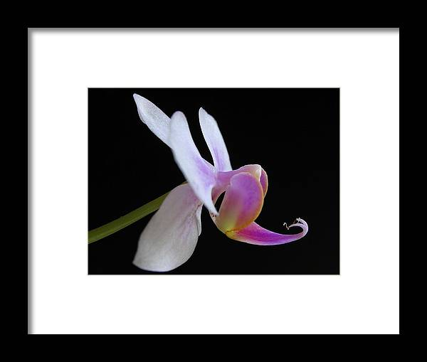 Georgia Framed Print featuring the photograph Pink Orchid by Juergen Roth