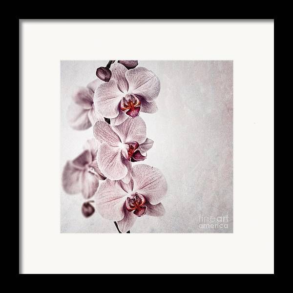 Aged Framed Print featuring the photograph Pink Orchid Vintage by Jane Rix