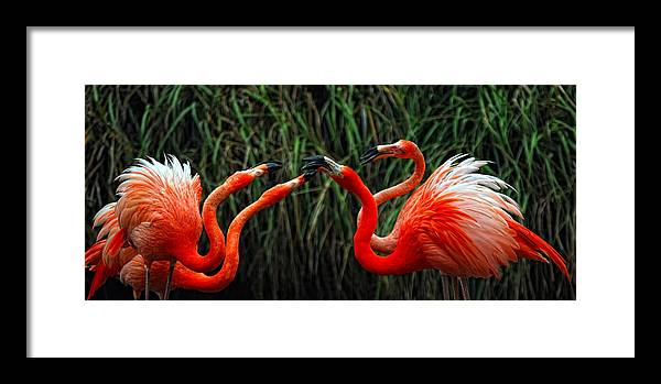 Bird Framed Print featuring the photograph Pink Passion by Bob Lewis