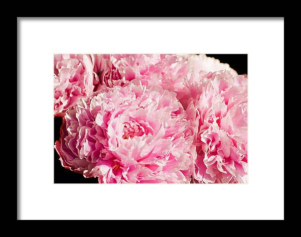 Botany Framed Print featuring the photograph Pink Peony Bouquet by Mary Lane