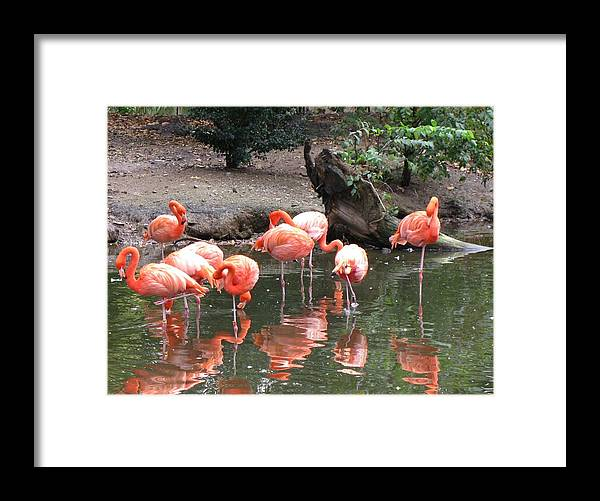 Landscape Framed Print featuring the photograph Pink Reflections by Gloria Byler
