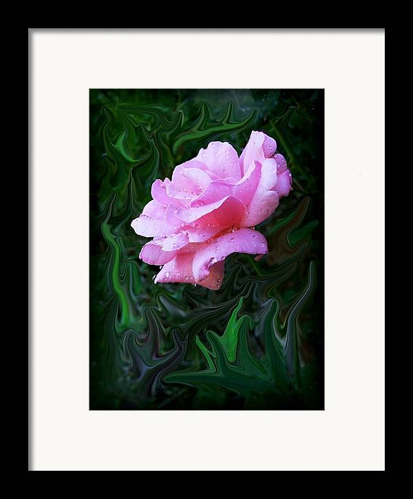 Rose Framed Print featuring the photograph Pink Rose by Jim Darnall