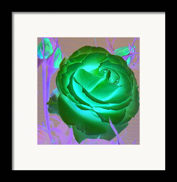 Rose Framed Print featuring the photograph Pink Rose by Mary Gaines